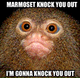 Marmoset Knock You Out by Taffi Louis