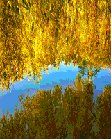 Golden Willows, Lost Lagoon by Diane Smithers
