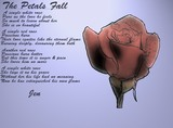 Rose Petals by Jennifer / Arrant
